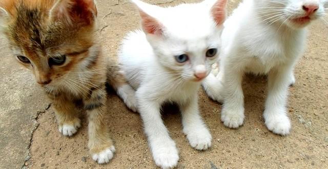 Geschlecht bei Katzenwelpen erkennen