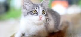 Purina One Katzenfutter