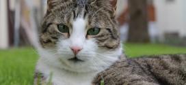 Katzenkot im Garten verhindern