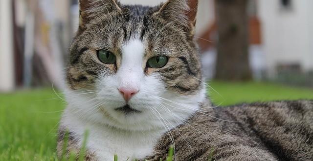 Was Tun Gegen Katzenkot Im Garten