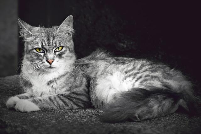 Katzentyp Diva