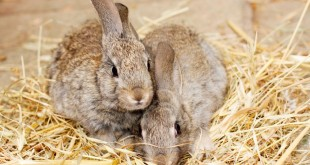 Kleintiergehege für Kaninchen