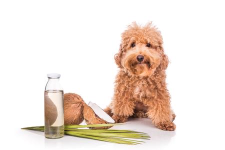 Kokosöl für Hunde
