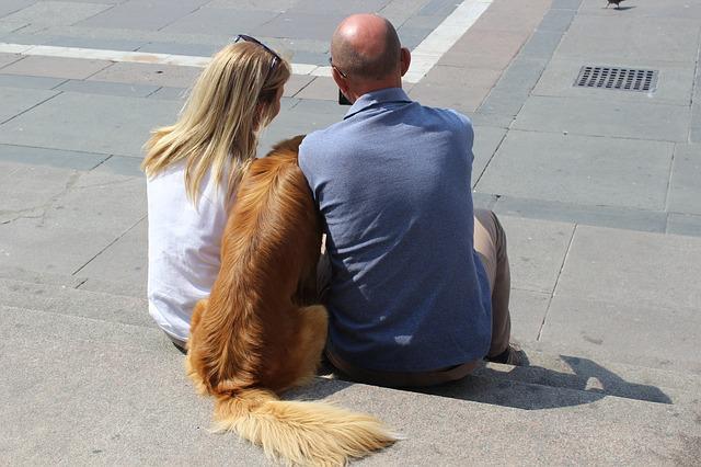 Kosten beim Kauf eines Hundes