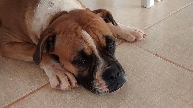 Krankheiten beim Hunderkennen