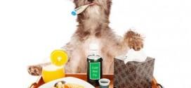 Naturheilkunde für Haustiere