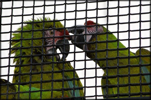 Papageienpaar mit Metallkäfig