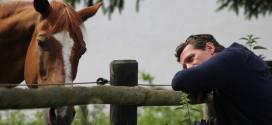 Pferdekauf