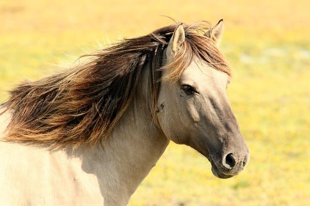 Pferderatgeber