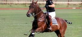 Pferdesport Polo