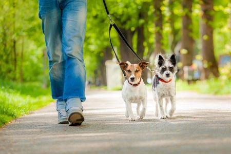 Spazieren mit dem Hund