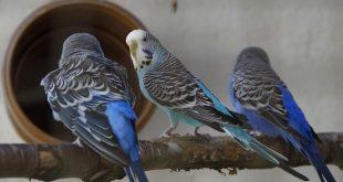 was gibt es für Vogelkrankheiten