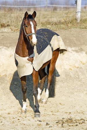 Decke für Pferd