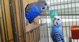 Tipps zu Vogelkäfigen