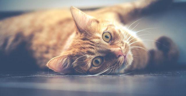 Bild Katzenurin entfernen