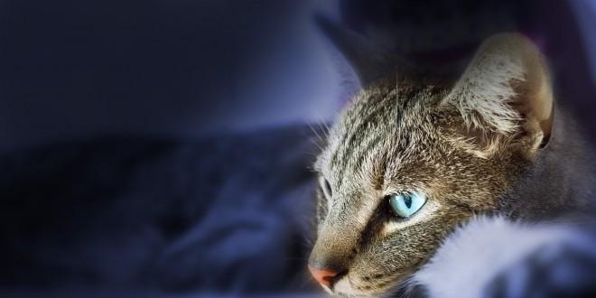 Wie lange kann man Katzen alleine lassen