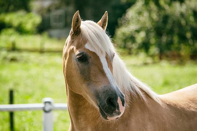 Tipps für das 1. eigene Pferd