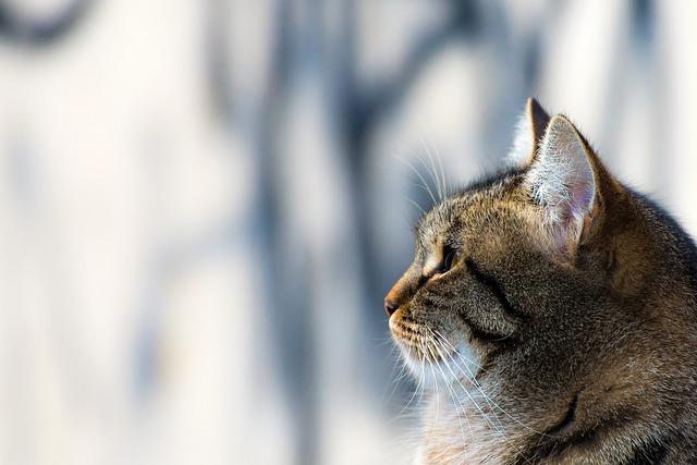 verfressende Katze