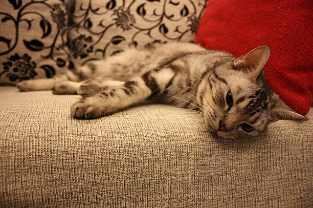 verschmuste Katze